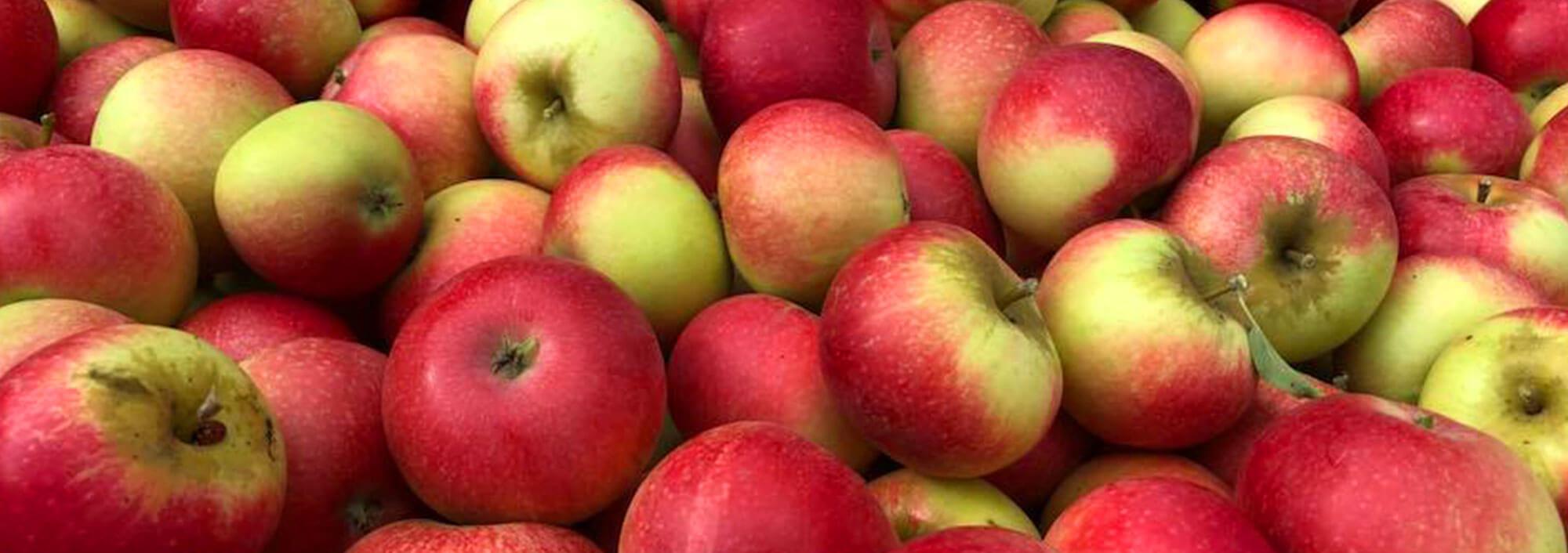 Bellida bedste æblesort