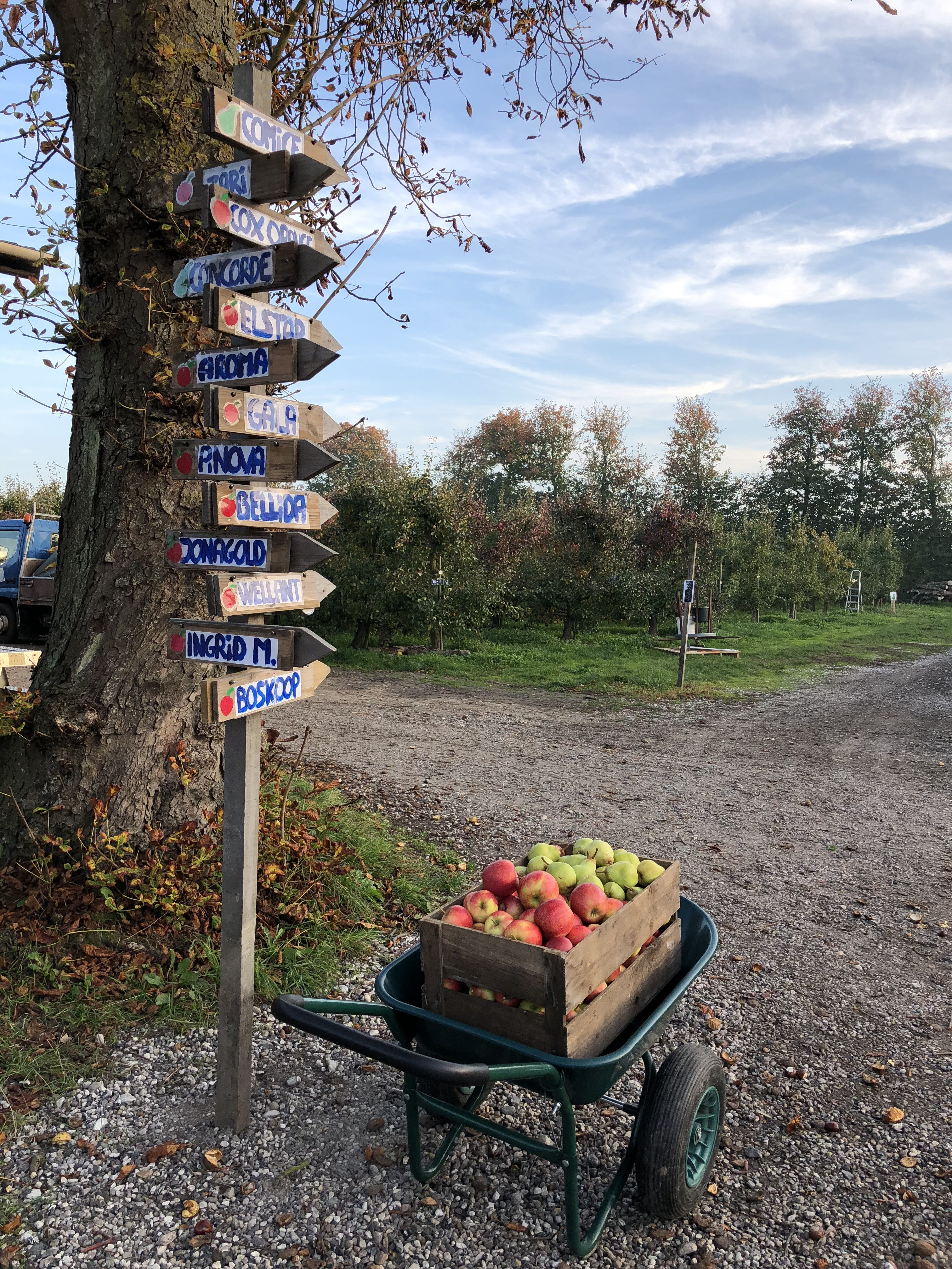 Pick your own and fruit farm shop
